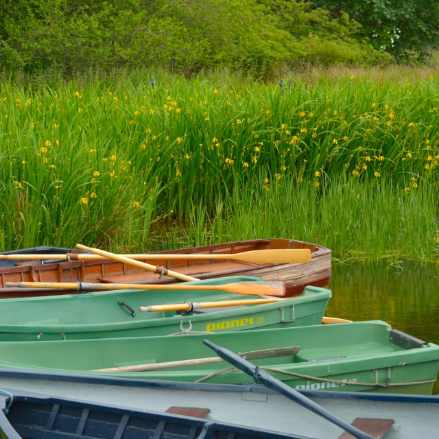 """""""Spring Boats"""" stock image"""