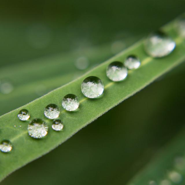 """Water Beads"" stock image"