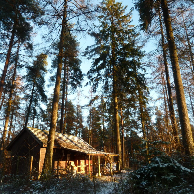 """""""cabin in the woods"""" stock image"""