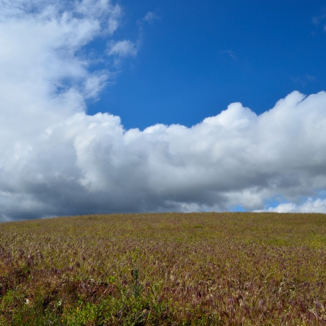 """""""Big cloud and an empty field."""" stock image"""