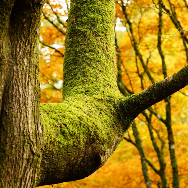 """""""Autumn Green and Gold"""" stock image"""