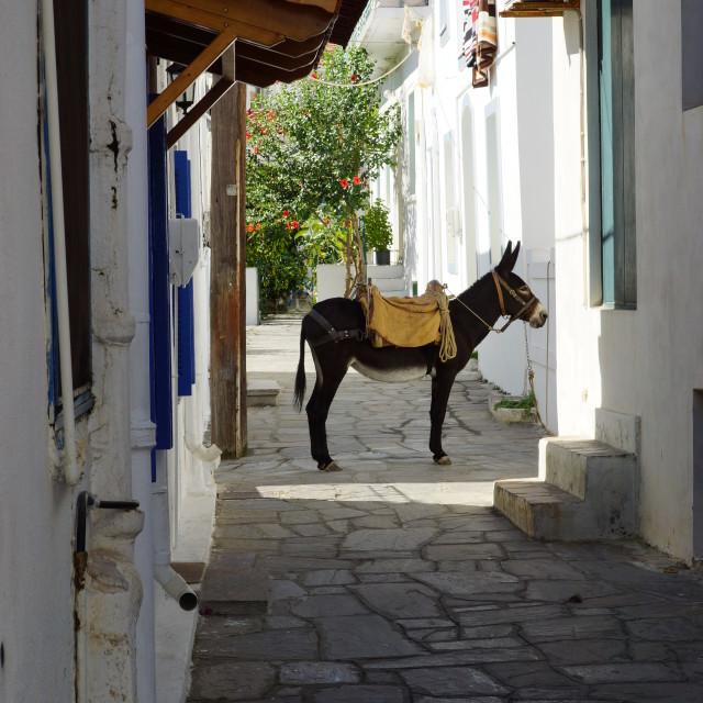 """""""Donkey Street"""" stock image"""