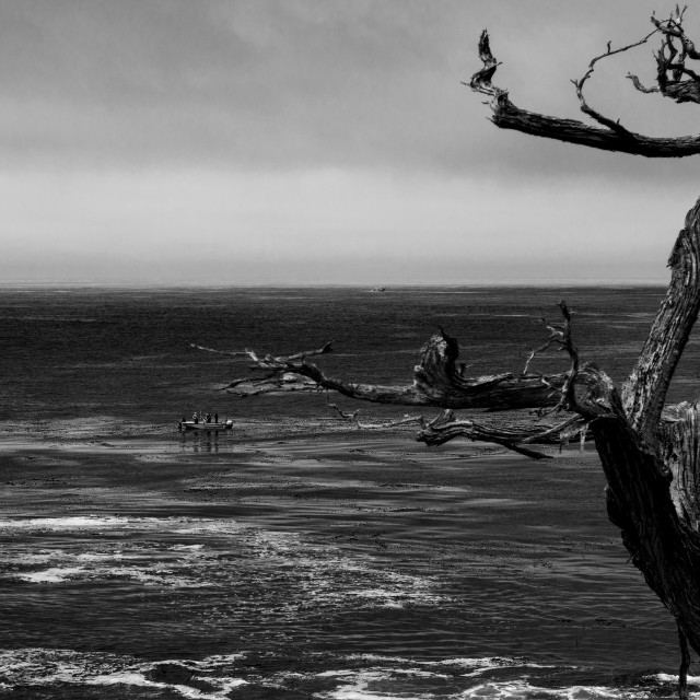 """Ghost Tree (B+W)"" stock image"