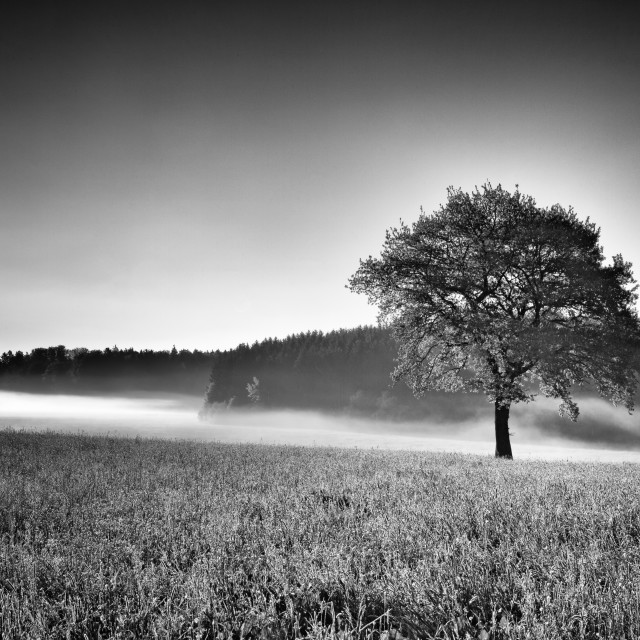 """Mist and Tree"" stock image"