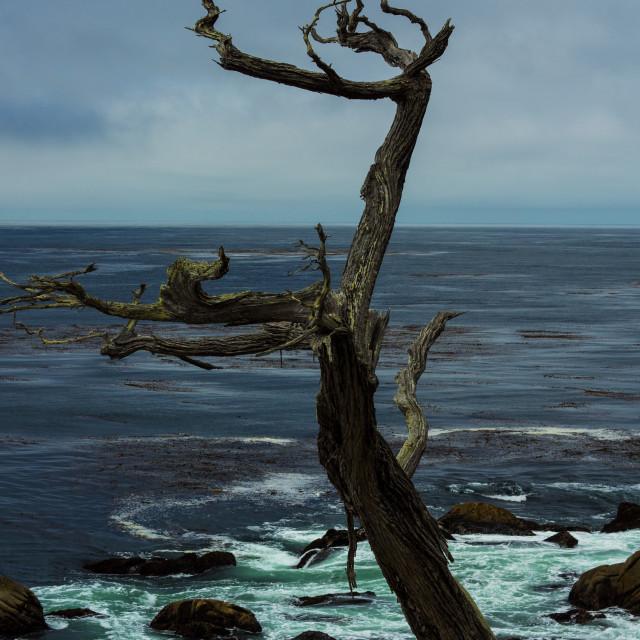"""Ghost Tree"" stock image"
