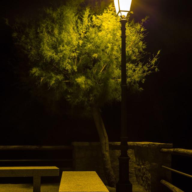 """streetlight that illuminates tree and bench"" stock image"