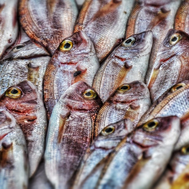 """Fish"" stock image"