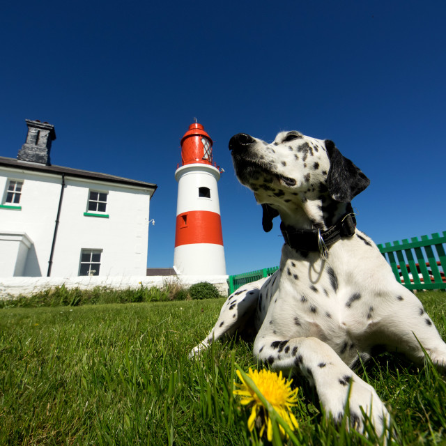 """Dalmatian and Lighthouse"" stock image"