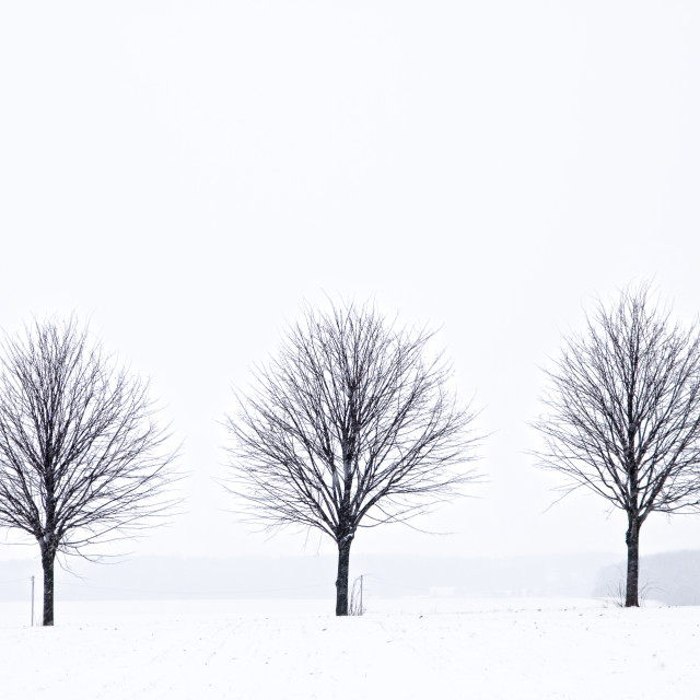 """3 trees"" stock image"