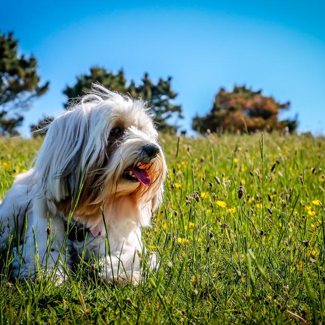 """""""Dog Days"""" stock image"""