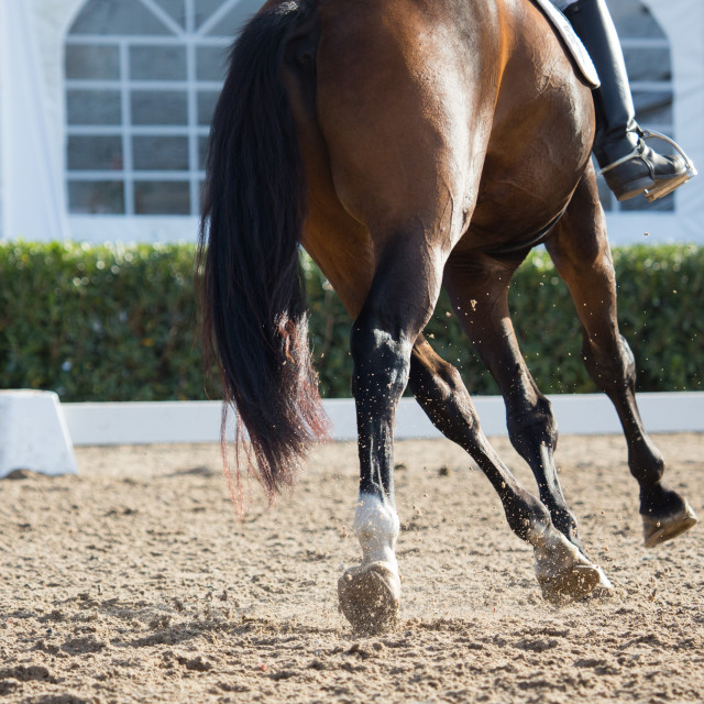 """Dressage Horses"" stock image"