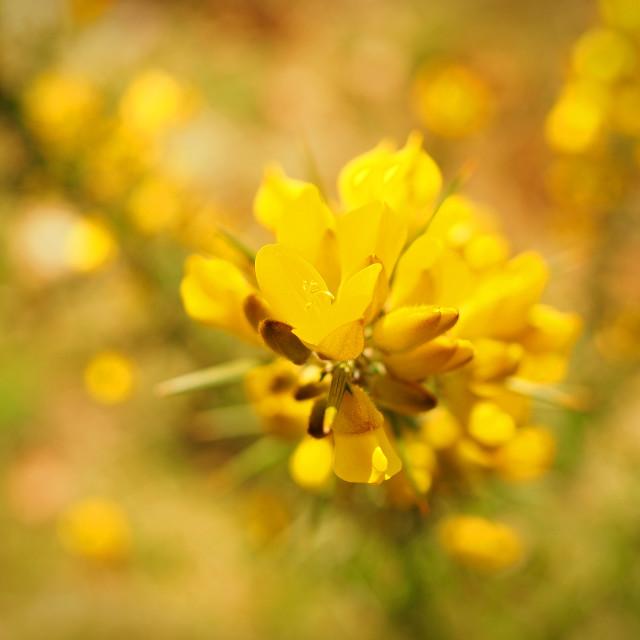 """Spring Bloom"" stock image"
