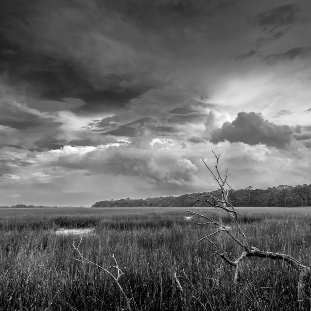 """Salt Marsh B&W"" stock image"