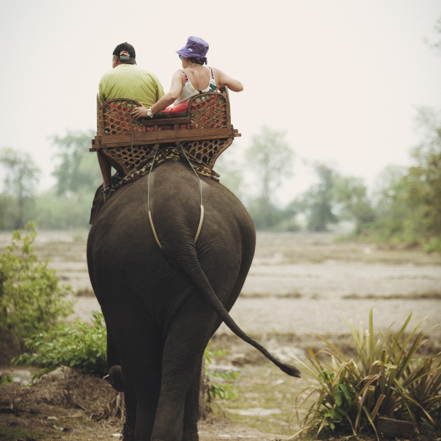 """Elephant ride"" stock image"