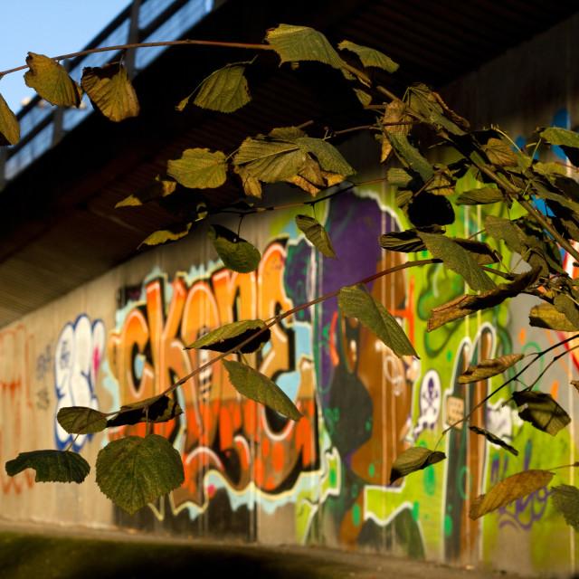 """""""Graffiti and nature"""" stock image"""
