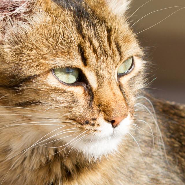"""Cat"" stock image"