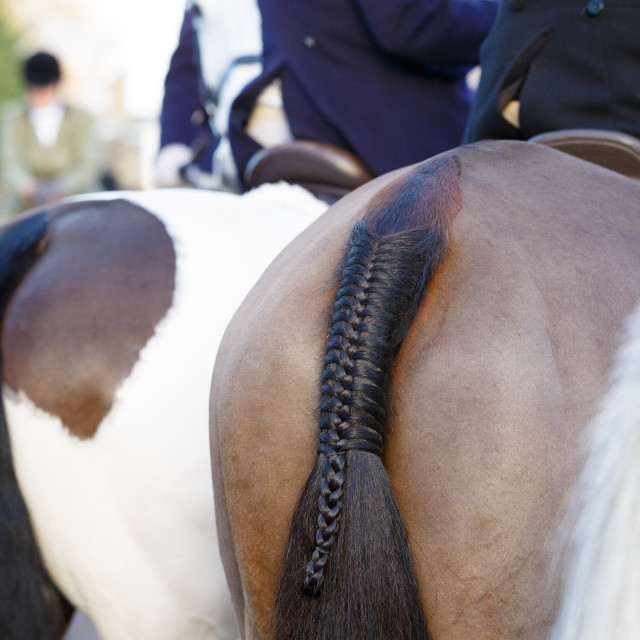 """""""Horse tail"""" stock image"""
