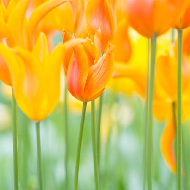 """""""Flower Garden"""" stock image"""