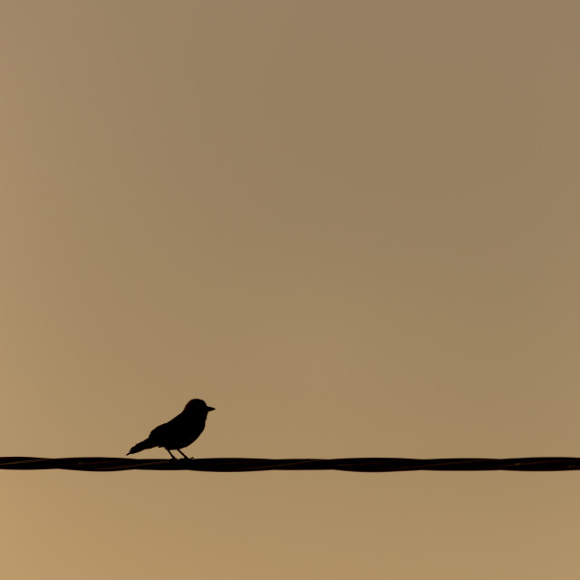 """Black Bird (Jackdaw) on a Wire"" stock image"