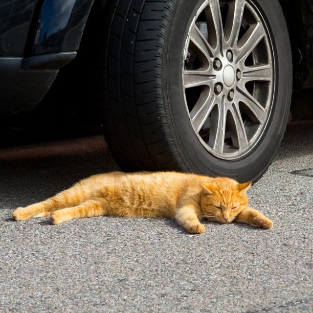 """""""Orange Cat"""" stock image"""