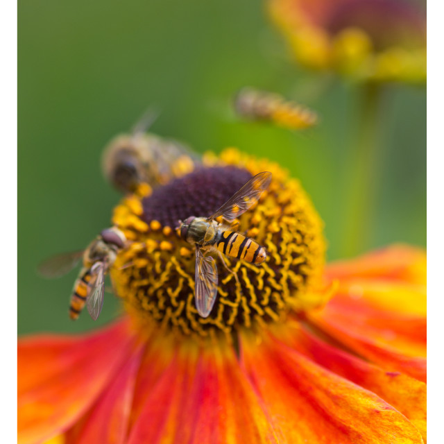 """Wasps and Wildflowers"" stock image"