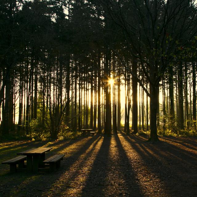 """Sunrise through the woods"" stock image"
