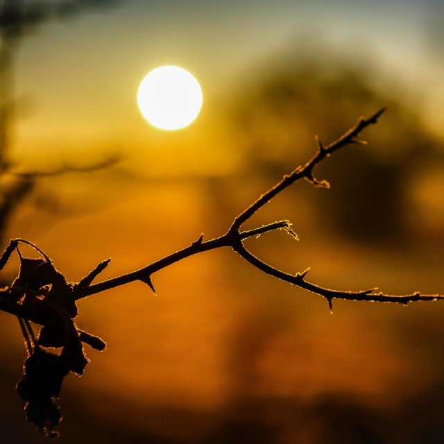 """Crisp Frost Twig at Sunrise"" stock image"