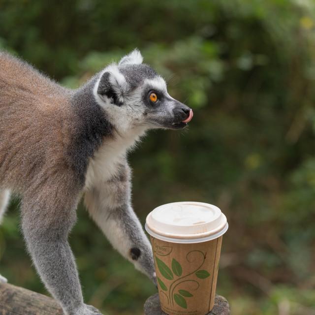"""Lima tasting coffee"" stock image"