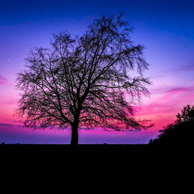 """""""Sunset Silhouette of a Tree"""" stock image"""