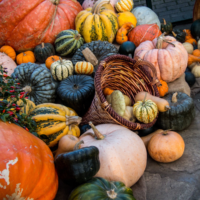 """Pumpkin Pile Up"" stock image"