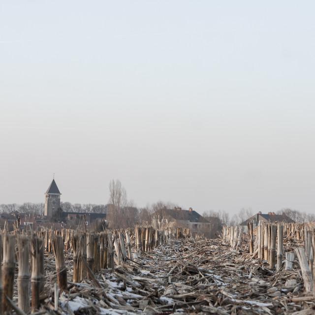 """Cropfield in winter"" stock image"