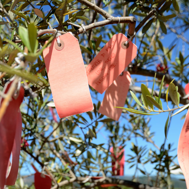 """Wishes on a wishing tree"" stock image"