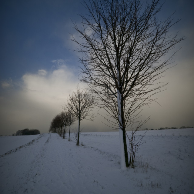 """winter scene 1"" stock image"