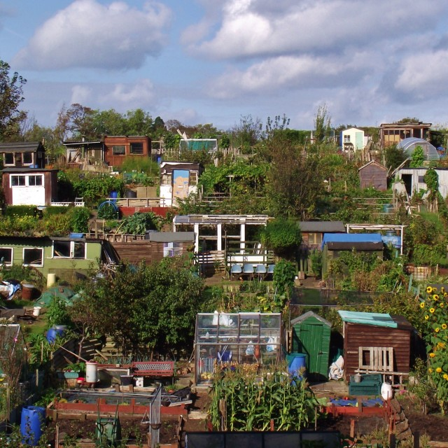 """Garden Allotments"" stock image"