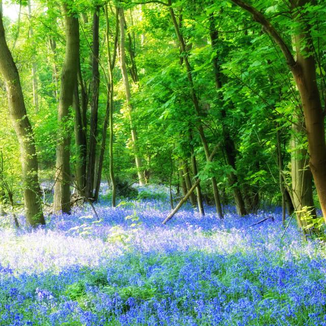 """The Blue Carpet Of Arger Fen"" stock image"