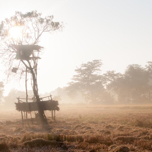 """Farmer tree-house"" stock image"