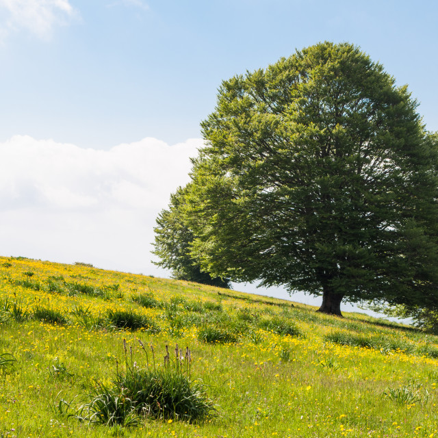 """A majestic tree"" stock image"