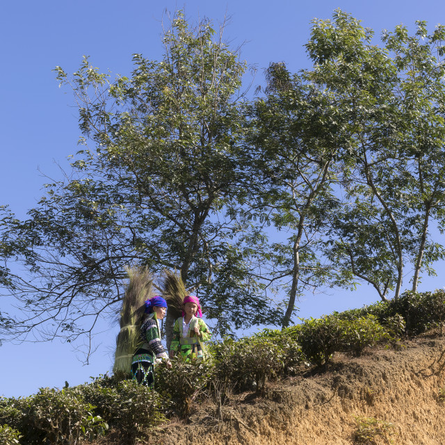 """Hmong Little Girls in traditional clothes walking on the hills"" stock image"