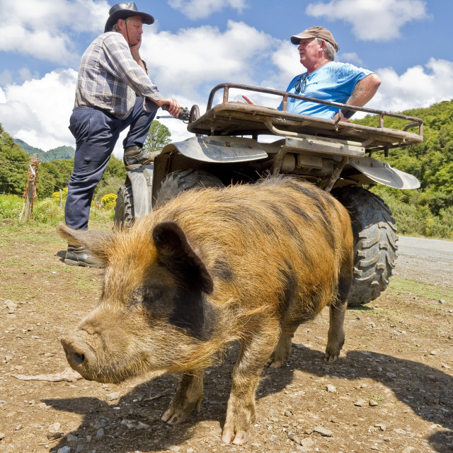 """""""This Little Piggy Stayed at Home"""" stock image"""