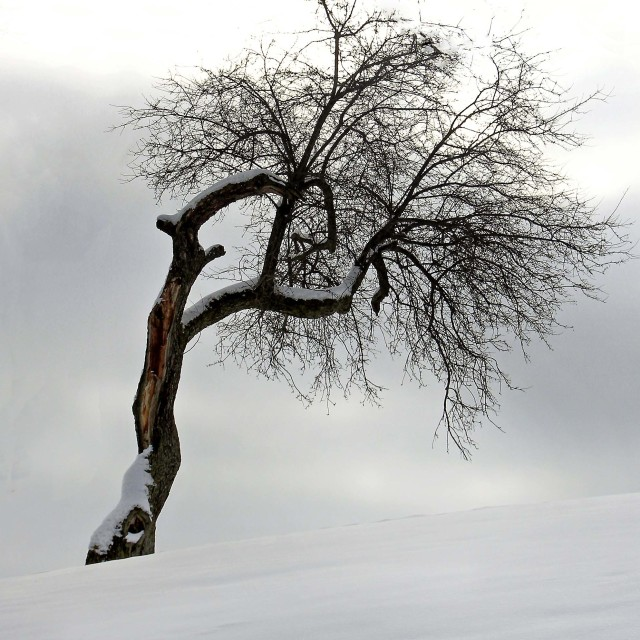 """Tree in the snow"" stock image"