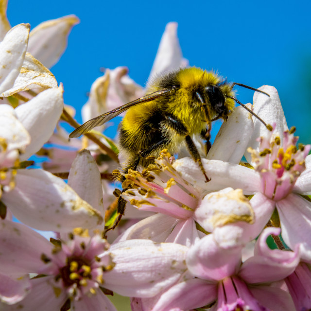 """Bee at work"" stock image"