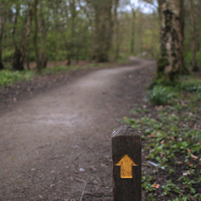"""""""Forest roadside marker"""" stock image"""