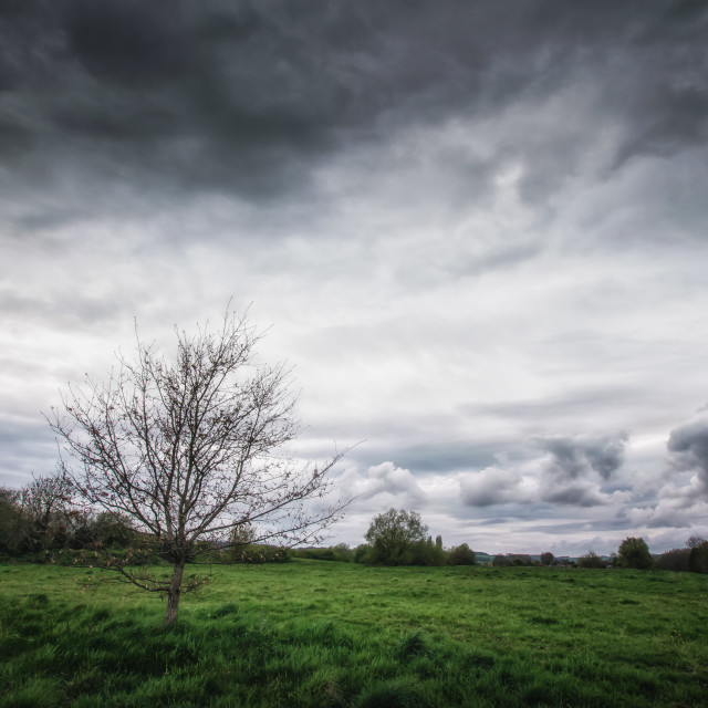 """""""Alone Under Stormy Skies"""" stock image"""