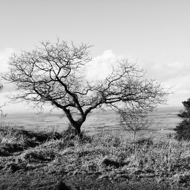 """monochrome tree"" stock image"