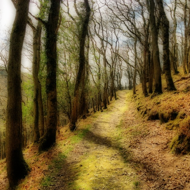 """Dreamy Forest in Exmoor, England."" stock image"