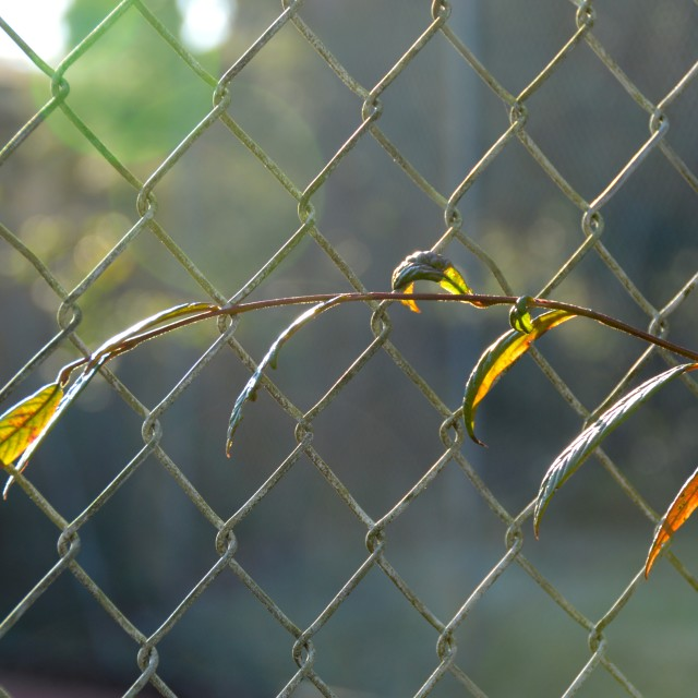 """""""Caught in the fence"""" stock image"""