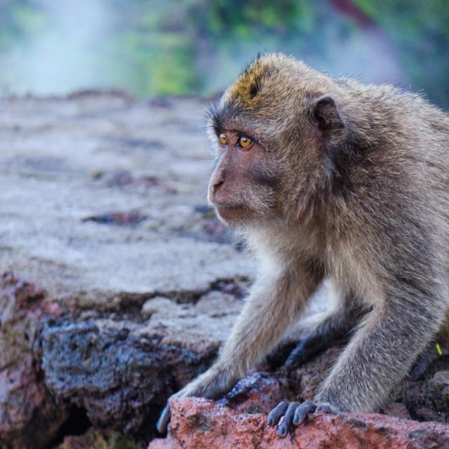 """Monkey Business Series 2"" stock image"
