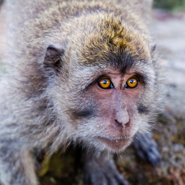 """Monkey Business Series 3"" stock image"