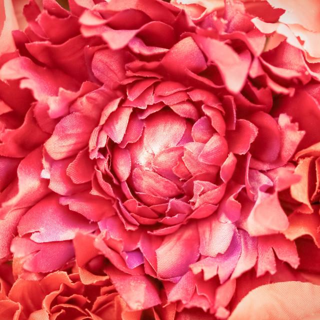 """silk flower petals"" stock image"