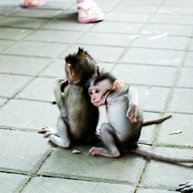 """Monkey Business Series 26"" stock image"